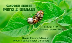 Garden Series: Pests and Disease